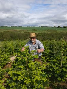 christmas tree grower ireland