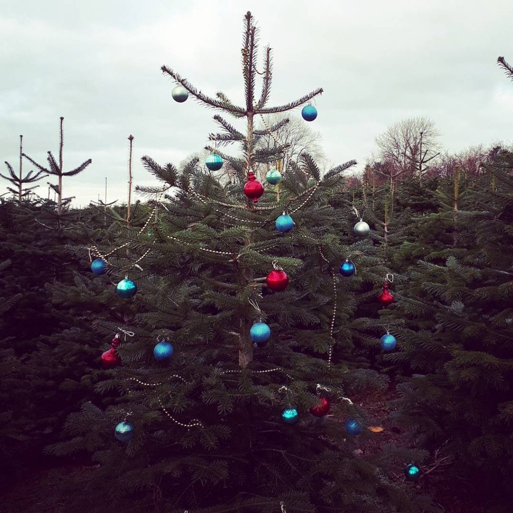 real christmas trees in Carlow and Kilkenny