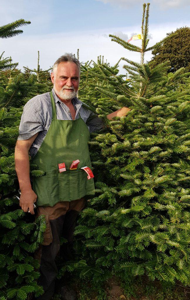 John Little wholesale Christmas trees