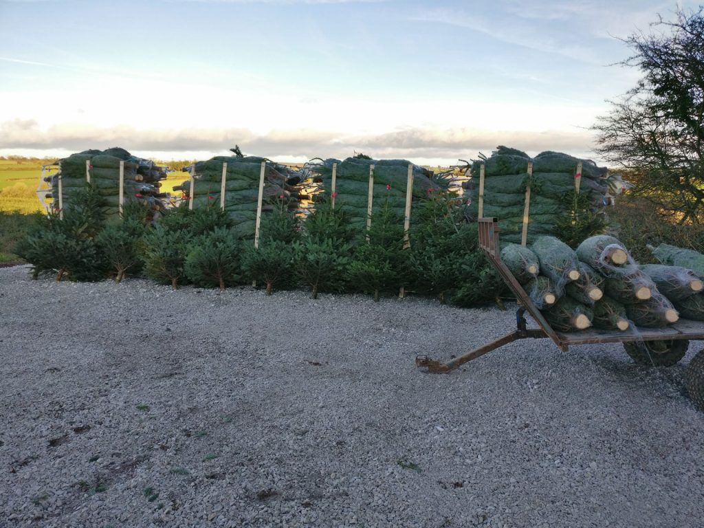 premium chistmas tree supplier Irleand and UK
